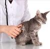 Ветеринарные клиники в Чернушке